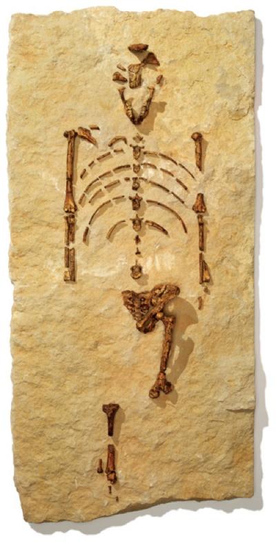 Lucy Bones 300 588