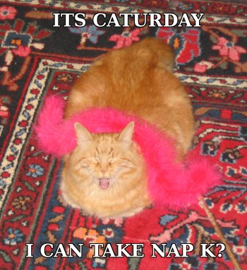 caturday.jpg