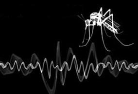 mosquito love.jpg