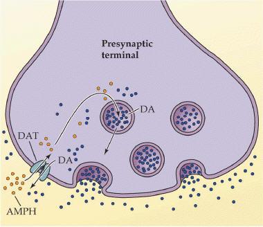 amphetamine synapse.jpg