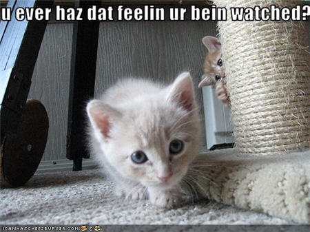 funny-pictures-kitten-is-watched.jpg