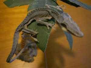 mummy lizard.jpg
