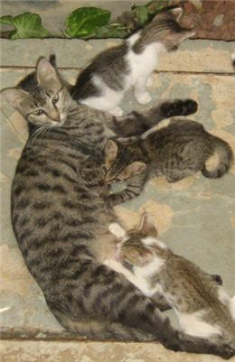 kittens nursing.jpg