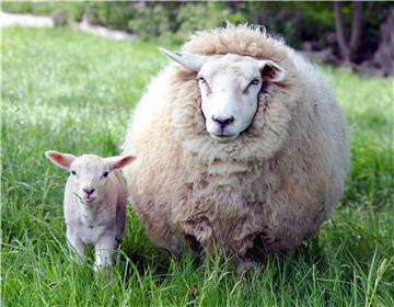 Ewe_and_lamb.jpg