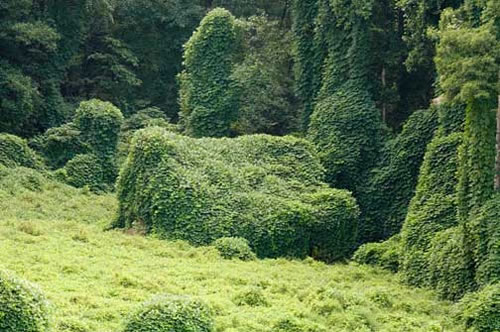 kudzu-covered-house.jpg