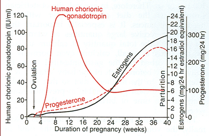 pregnancy hormones.png