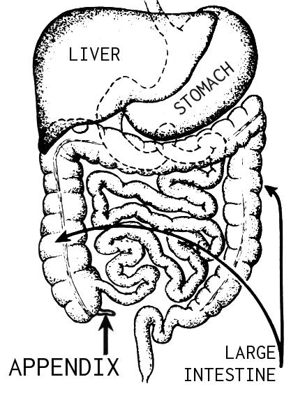 Appendix_(PSF).png